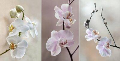 Obraz Orchidea (Storczyki) - pastelowe