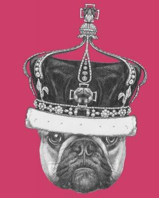 Obraz Oryginalny rysunek Buldoga Francuskiego z koroną. Pojedynczo na kolorowym tle