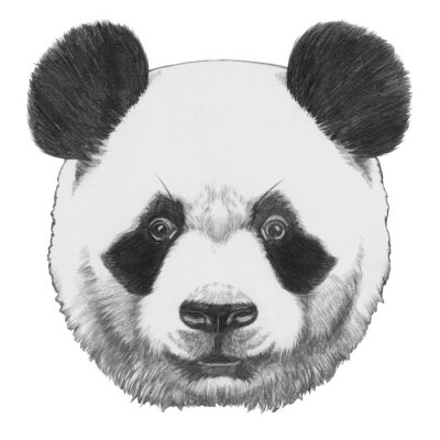 Obraz Oryginalny rysunek Panda. Pojedynczo na białym tle