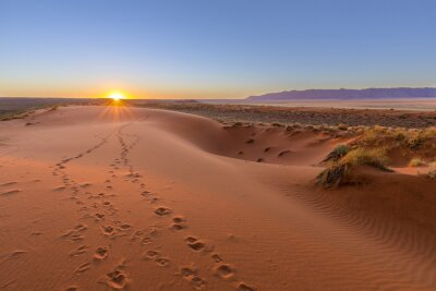 Obraz Oryx tracks to sunset