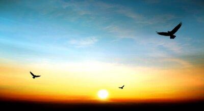 Obraz Orzeł latający w niebo piękny zachód słońca