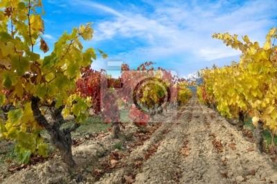 otoño en la viña