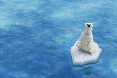 Obraz Ours Blanc / Fonte des glaces