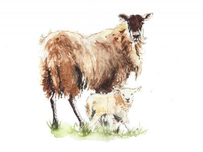 Owce z jagnięciny matki i dziecka zwierząt akwarela ilustracji na białym tle