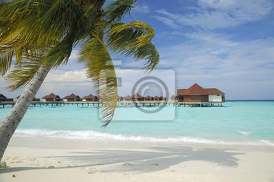 palmy na plaży i morza miejscowości