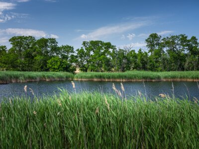 panoramic view to forest lake through grass in summer day under blue sky