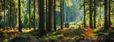Obraz Panoramiczny słoneczny las jesienią