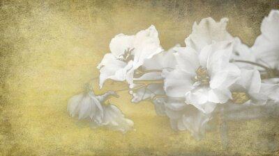 Obraz papier Blumen konzept