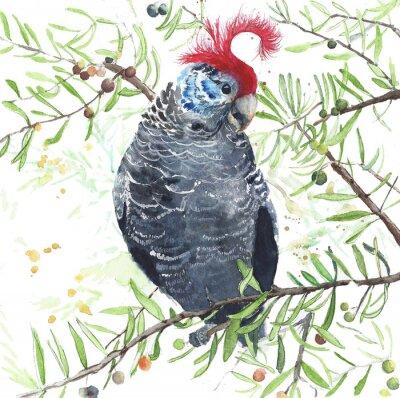 Papuga australijski ptak kolorowy ptak siedzi na gałęzi malarstwa ilustracji akwarela na białym tle