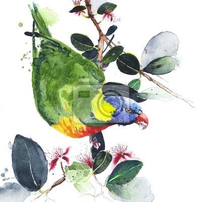 Papuga lorikeet kolorowy ptak siedzi na gałęzi australijskiego ptaka akwarela ilustracji na białym tle