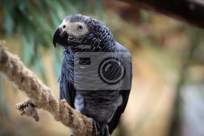 Parrot na liny