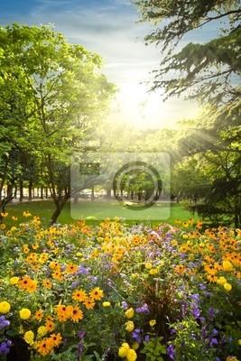 Parter kwiatów zaokrąglonymi drzew przed zachodem słońca promieni słonecznych