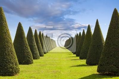 Parter lub stożkowe żywopłotów i trawników z Versailles Chateau