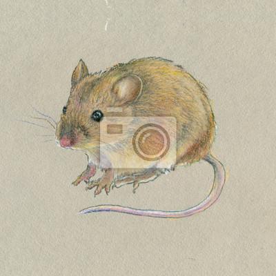 Pastel olejny. Mała mysz na szarym tle