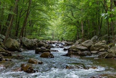 Obraz Patrząc od centrum strumienia z dużymi głazami w lesie.
