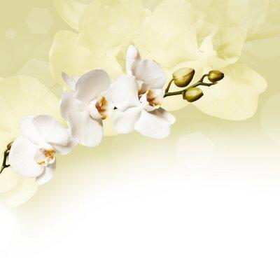 Obraz Piękna biała orchidea
