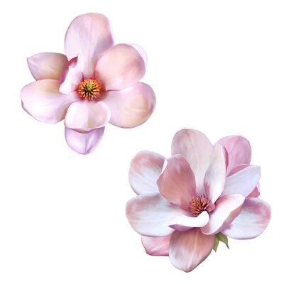 Obraz Piękna magnolia, wiosna kwiat samodzielnie