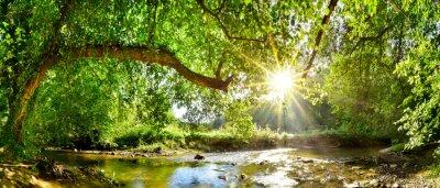 Obraz Piękna panorama lasu ze strumykiem i jasnym słońcem wpadającym przez drzewa