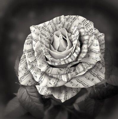 Obraz Piękne czarno-biała róża z notatki na płatkach