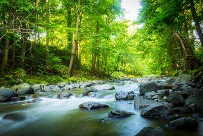 Obraz Piękne marzycielski górski potok w lesie