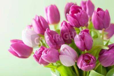 Obraz piękne purpurowe kwiaty tulipanów w tle