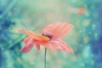 Obraz Piękny czerwony mak w artystycznych delikatnych kolorach z bokeh światła
