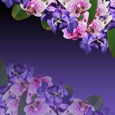 Obraz Piękny kwiatowy tło niebieskie i fioletowe storczyki