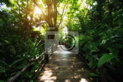 Piękny las deszczowy na ścieżkach przyrodniczych w Tajlandii jest bardzo popularny wśród fotografów i turystów. Koncepcja naturalna i podróżna.