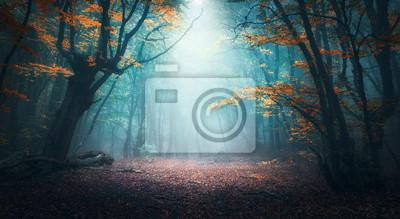 Obraz Piękny mistyczny las w błękitnej mgle w jesieni. Kolorowy krajobraz z zaczarowanymi drzewami z pomarańczowymi i czerwonymi liśćmi. Sceneria z ścieżką w marzycielskim mgłowym lesie. Kolory jesieni w pa