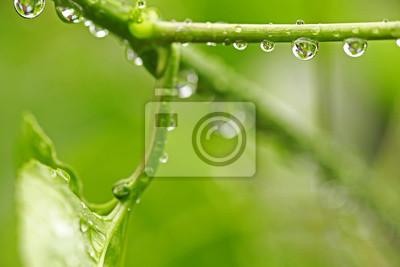 Obraz Piękny zielony liść z kroplami wody