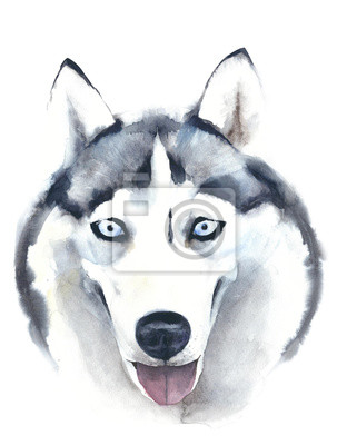 Pies akwarela ilustracji husky rasy wyizolowanych na białym tle