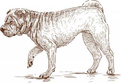 Obraz Pies na spacerze