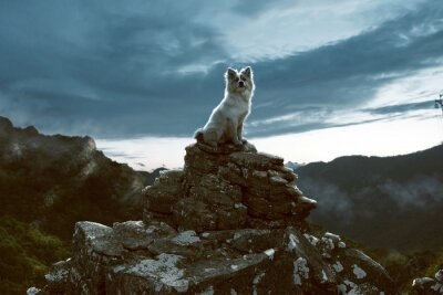 Obraz Pies siedzi na skale w górach