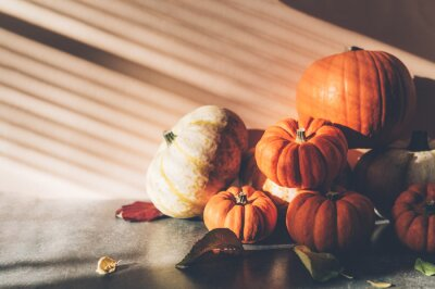 Obraz Pile of different pumpkins with strong shadows. Halloween or Thanksgiving Holiday backgrounds
