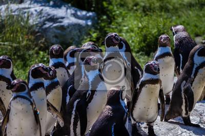 Pingwiny na karmienie