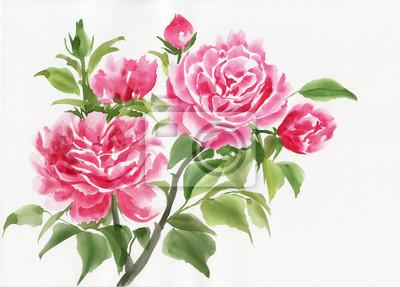 Pink rose bush oryginalny obraz akwarela na białym tle