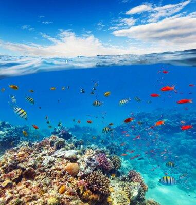 Obraz Podwodne rafy koralowej z horyzontu i wody fale