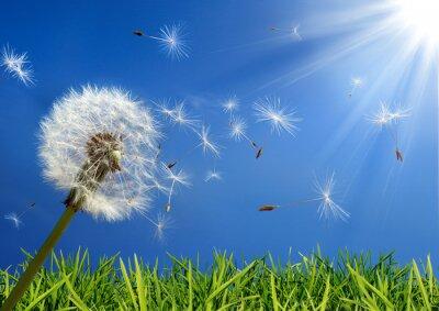 Obraz Pojęcie alergia na wiosnę - ekskluzywna