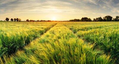 Obraz Pole pszenicy krajobraz z toru w czasie zachodu słońca