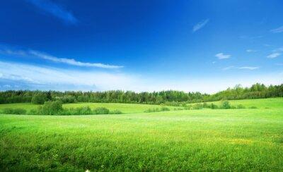 Obraz pole trawy i perfect sky