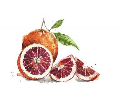 Pomarańcze krwi pomarańcze owoców akwarela ilustracji samodzielnie na białym tle