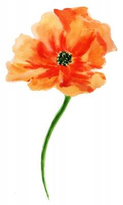 Obraz Pomarańczowy maku. akwarela, odizolowane na białym tle