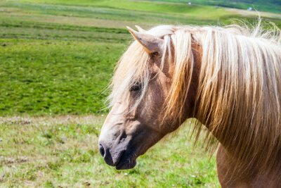 Portrait of horse with a light mane