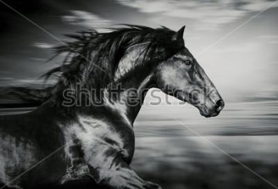 Obraz portret hiszpańskiego konia do biegania, zdjęcie czarno-białe