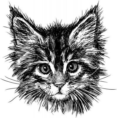 Obraz Portret kota