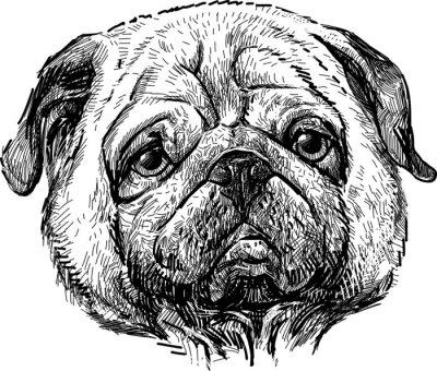 Obraz portret mops