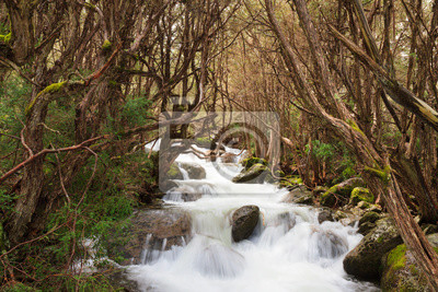 Pristine Stream at Thredbo, alpine New South Wales, Australia
