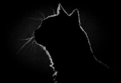 Obraz Profile cat in the dark