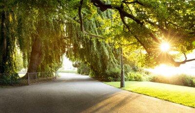 Obraz Promenada w pięknym parku miejskim