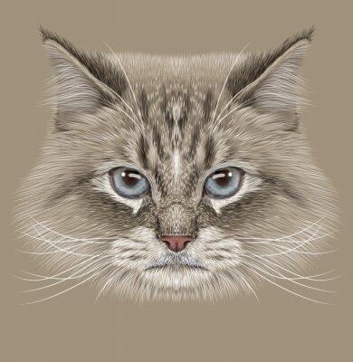 Obraz Przykładami portret kota syberyjskiego. Śliczne Krajowy Punkt kolor kot z niebieskimi oczami.